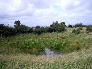 Chanctonbury Dew Pond in Sussex by Margaret Anne Clarke